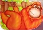 Chunky Orangutan