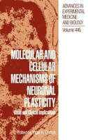 Molecular And Cellular Mechanisms Of Neuronal Plasticity: Basic And Clinical Implications