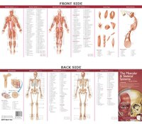 Anatomical Chart Company's Illustrated Pocket Anatomy: The Muscular And Skeletal Systems Study Guide
