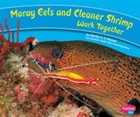 Moray Eels And Cleaner Shrimp Work Together