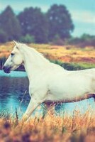 White Horse January Notebook & Journal. Productivity Work Planner & Idea Notepad: Brainstorm Thoughts, Self Discovery, To
