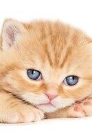 British Shorthair Kitten Autumn Notebook & Journal. Productivity Work Planner & Idea Notepad: Brainstorm Thoughts, Self