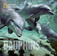 Face aux dauphins