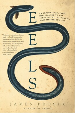 Book Eels: An Exploration, from New Zealand to the Sargasso, of the World's Most Mysterious Fish by James Prosek
