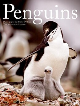 Book Penguins by Brutus Ostling