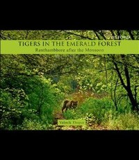 Tigers in the Emerald Forest: Ranthambhore after the Monsoon