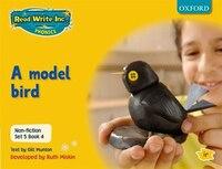 Read Write Inc. Phonics: Non-fiction Set 5 (Yellow) A model bird - Book 4