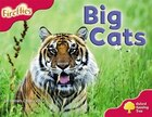 Oxford Reading Tree: Stage 4: More Fireflies A Big Cats