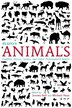 Plato's Animals: Gadflies, Horses, Swans, And Other Philosophical Beasts by Jeremy Bell