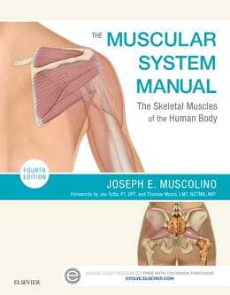 Book The Muscular System Manual: The Skeletal Muscles Of The Human Body by Joseph E. Muscolino