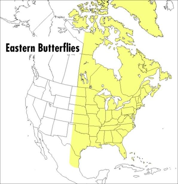 A Field Guide to Eastern Butterflies by Paul A. Opler