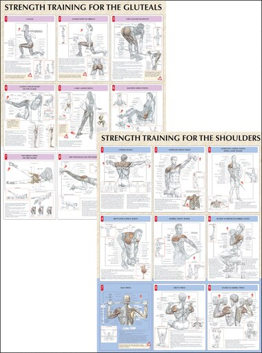 Strength Training Anatomy Poster Series Book By Frederic Delavier