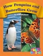 How Penguins and Butterflies Grow