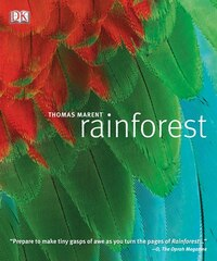 Rainforest Paperback