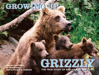 Growing Up Grizzly: The True Story of Baylee and Her Cubs by Amy Shapira