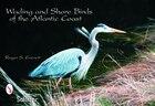 Wading & Shore Birds Of The Atlantic Coast