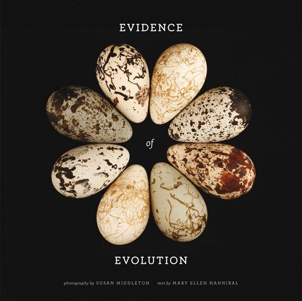 Evidence of Evolution by Mary Ellen Hannibal