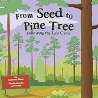 From Seed to Pine Tree: Following the Life Cycle