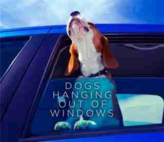 Dogs Hanging Out Of Windows by Various