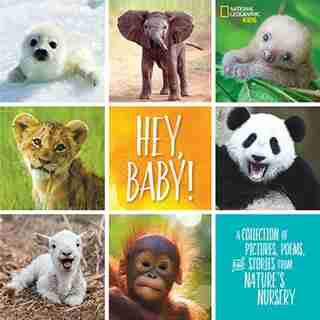 Hey, Baby!: A Collection Of Pictures, Poems, And Stories From Nature's Nursery by Stephanie Warren Drimmer