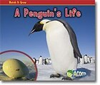 A Penguins Life