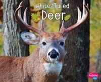 White-Tailed Deer de G.G. Lake