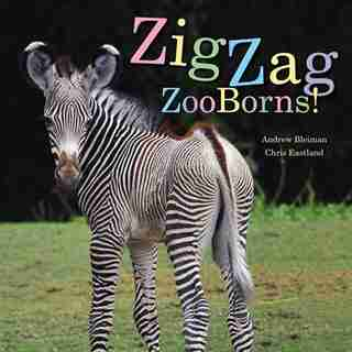 ZigZag ZooBorns!: Zoo Baby Colors and Patterns by Andrew Bleiman