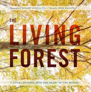 The Living Forest: A Visual Journey Into The Heart Of The Woods by Robert Llewellyn