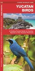 Yucatan Birds: A Folding Pocket Guide To Familiar Species Of The Yucatan Peninsula by James Kavanagh
