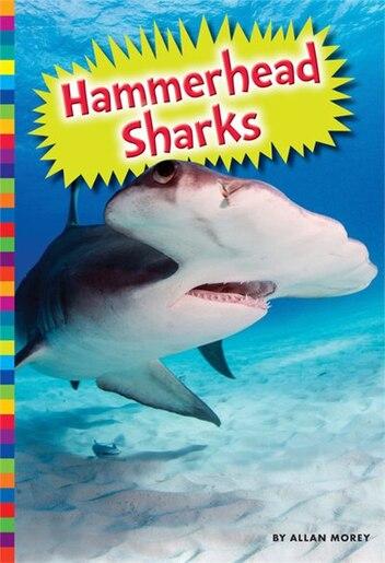 Hammerhead Sharks by Allan Morey
