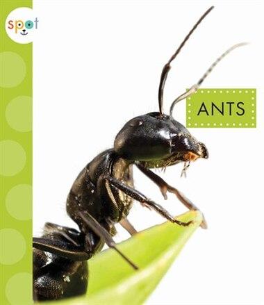 Ants by Nessa Black