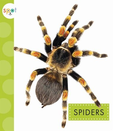 Spiders by Nessa Black