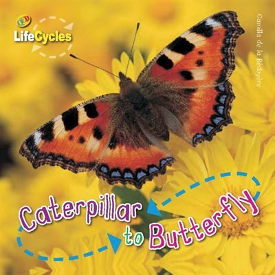 Caterpillar To Butterfly by Camilla De La Bedoyere