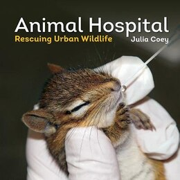 Book Animal Hospital: Rescuing Urban Wildlife by Julia Coey