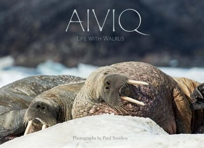 Aiviq (inuktitut): Life With Walruses by Paul Souders