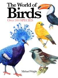 EXPERT GT BIRDS