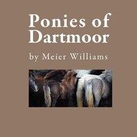 Ponies Of Dartmoor
