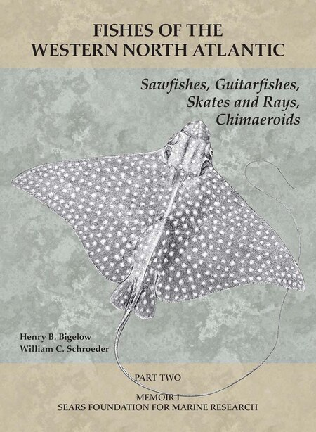 Sawfishes, Guitarfishes, Skates And Rays, Chimaeroids: Part 2 by Henry B. Bigelow