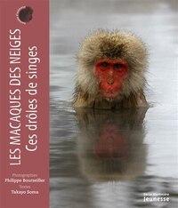 Macaques des neiges, ces drôles de singes (Les)