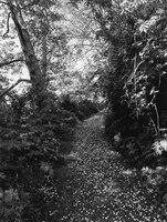 Robert Adams: An Old Forest Road