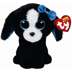 TRACEY - black &white dog - reg
