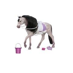 Lori - GREY ANDALUSIAN HORSE