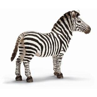 Zebra Male