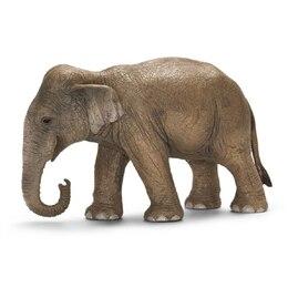 Asian Elephant, Female