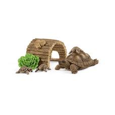 Maison de la tortue