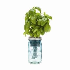 Pot Mason de jardinage à réserve d'eau–Basilic biologique