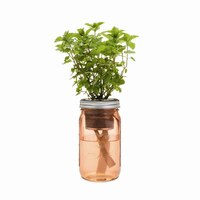 Self-Watering Herb Garden Jar - Mint