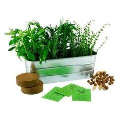 Ensemble à planter – Herbes d'Italie