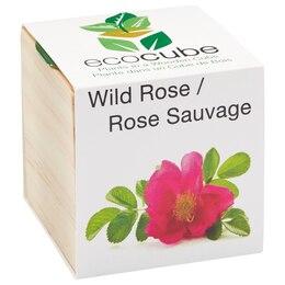 Ecocube Wild Rose