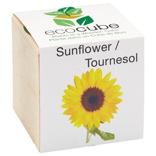 Ecocube Sunflower